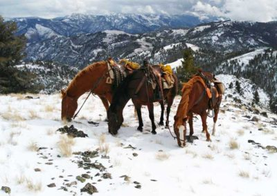 Horses resting on elk hunt