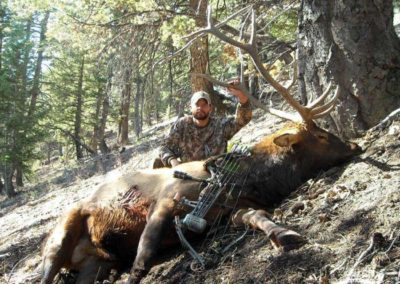 Fred's Archery Elk