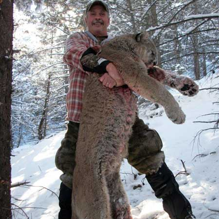 Idaho Lion Hunts