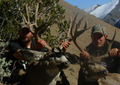 Muley Bucks